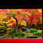 京都紅葉ライトアップランキング2015!おすすめベスト5