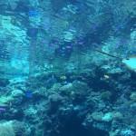 沖縄旅行を泳がないで楽しむには?2泊3日のプランをご紹介-前編-