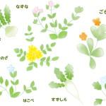 七草粥の由来とは?七草の意味と効果を知ろう!