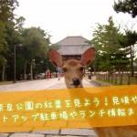 奈良公園の紅葉を見よう!見頃やライトアップ駐車場やランチ情報まとめ