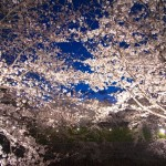 福岡で夜桜!ライトアップが楽しめるおすすめの場所11選!
