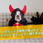 ハロウィンを福岡で楽しもう!開催イベントをチェック!親不孝はある?