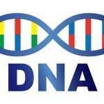自由研究でDNAを抽出!ブロッコリーから取り出す実験の考察とまとめ