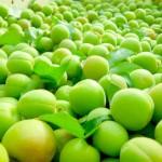 梅シロップで残った梅のジャム以外の活用法は?甘露煮などのレシピ